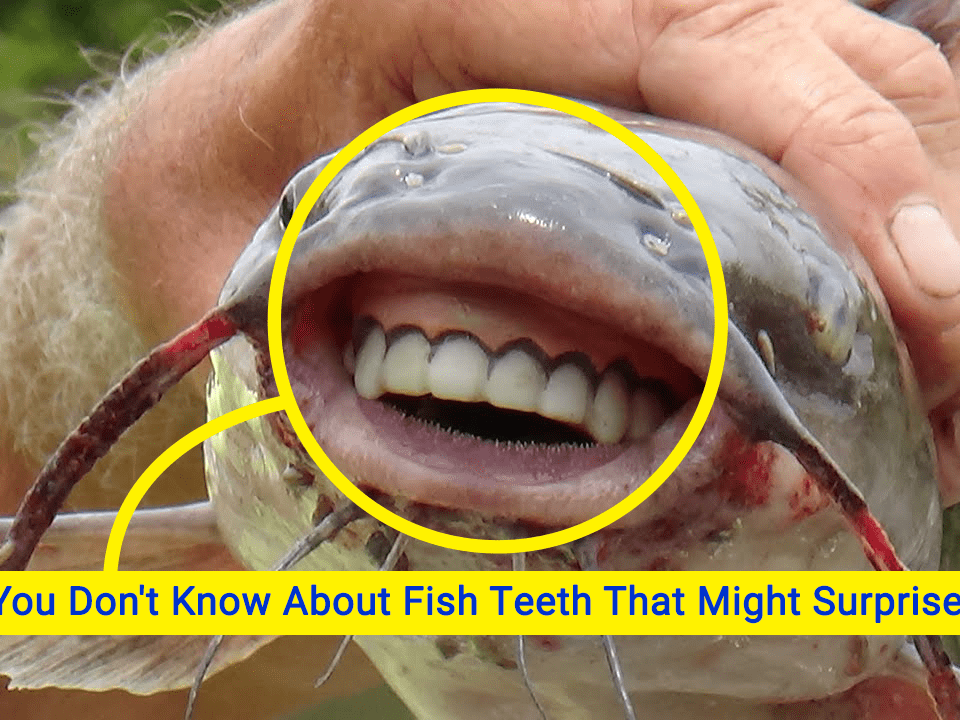 fish teeth